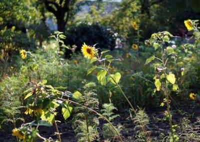 Bluehwiese-im-Vorgarten